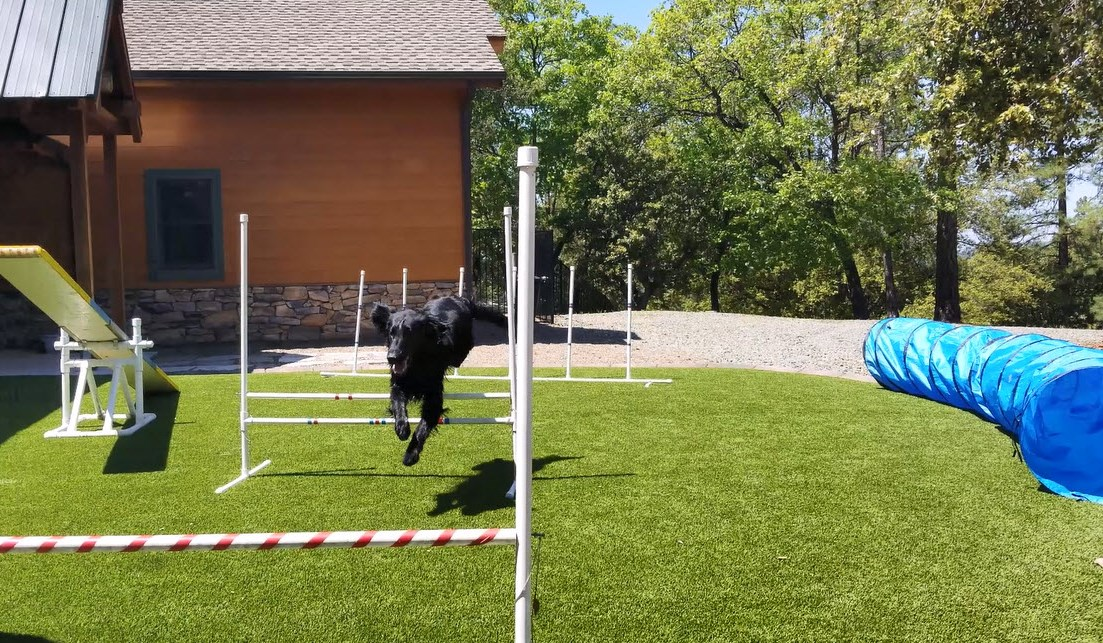 Dog agility course and fetching lawn at California Gold Country vacation rental
