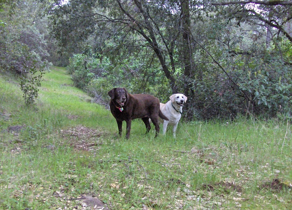 Private hiking trails on 60-fenced acres in Jackson California