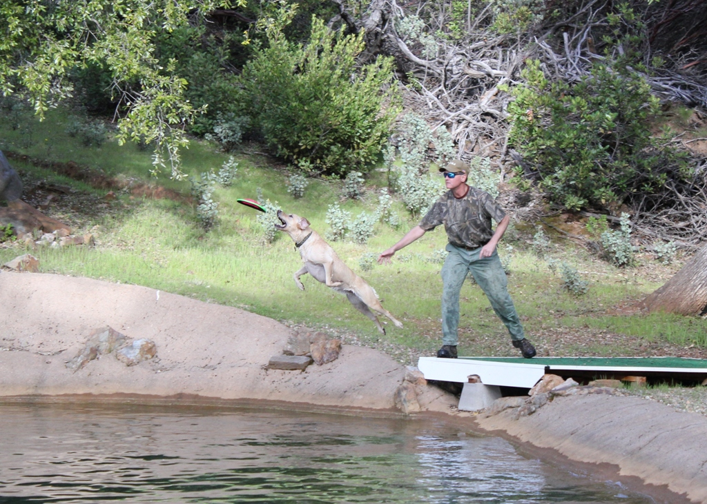 Dock diving into private pond at Dog & Pony Ranch