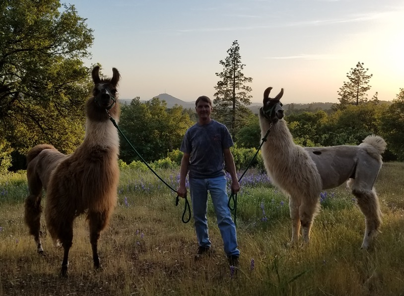 Taking the llamas for a walk on 60 acre ranch